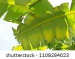 banana leaf green tropical... | Shutterstock . vector #1108284023