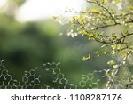 plants background with... | Shutterstock . vector #1108287176