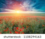 green and red beautiful poppy... | Shutterstock . vector #1108294163