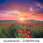 green and red beautiful poppy... | Shutterstock . vector #1108294166