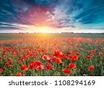 green and red beautiful poppy... | Shutterstock . vector #1108294169