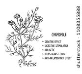 hand drawn botanical sketch ... | Shutterstock .eps vector #1108355888