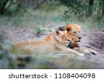 portrait of pair of african... | Shutterstock . vector #1108404098