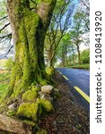 Small photo of Tree Canopy with moss on scenic roadway in County Galway, Ireland