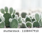 Cactus In White Pot On Light...