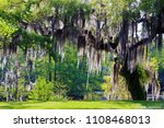 Mossy Oak Tree Slidell Louisiana - Fine Art prints