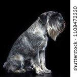 mittelschnauzer dog  isolated ... | Shutterstock . vector #1108472330