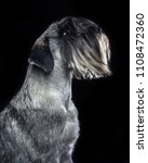 mittelschnauzer dog  isolated ... | Shutterstock . vector #1108472360