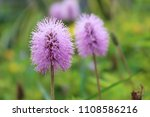 small purple flowers | Shutterstock . vector #1108586216