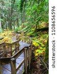 A Half Kilometer Giant Cedars...