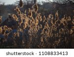 reed beds on the lake   common...   Shutterstock . vector #1108833413