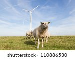 Windmill And Sheep In The...