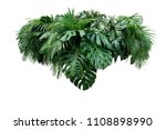 Small photo of Tropical leaves foliage plant jungle bush floral arrangement nature backdrop isolated on white background, clipping path included.