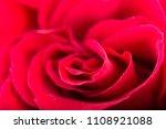 red rose flower studio shot | Shutterstock . vector #1108921088