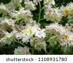 delicate floral blurred... | Shutterstock . vector #1108931780