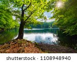 old beech tree on the shore of... | Shutterstock . vector #1108948940
