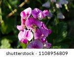nice flower blossom | Shutterstock . vector #1108956809