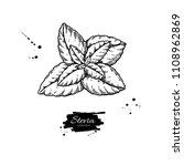stevia  vector drawing. herbal... | Shutterstock .eps vector #1108962869