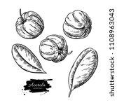 acerola fruit vector drawing... | Shutterstock .eps vector #1108963043