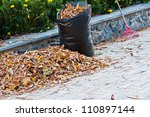 Cleaning Of Autumn Leaves. A...