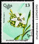 Small photo of CUBA - CIRCA 1980: a stamp printed in the Cuba shows Silverleaf Redgal, Morinda Royoc, Wildflower, circa 1980