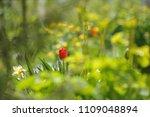 tulips on the flowerbed in... | Shutterstock . vector #1109048894