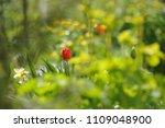 tulips on the flowerbed in... | Shutterstock . vector #1109048900