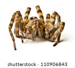 Close Up Of Wolf Spider On...