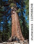 mariposa grove yosemite ... | Shutterstock . vector #1109088248