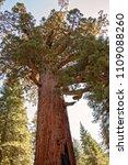 mariposa grove yosemite ... | Shutterstock . vector #1109088260