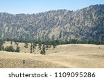 evergreen pine tree forest and... | Shutterstock . vector #1109095286
