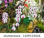 orchids flower  orchids closed...   Shutterstock . vector #1109114426
