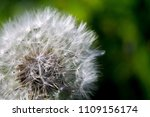 close up of a cap of white... | Shutterstock . vector #1109156174