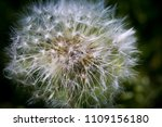 close up of a cap of white... | Shutterstock . vector #1109156180