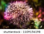 close up of a cap of white... | Shutterstock . vector #1109156198