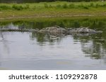 crocodile in the water | Shutterstock . vector #1109292878