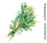 watercolor botanical  realistic ...   Shutterstock . vector #1109294816