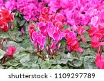 Exotic Pink Flowers