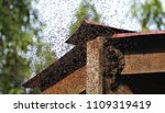 Bees Swarming Bee Hive Is A Jo...