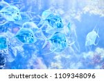 beautiful sea world. sea fish... | Shutterstock . vector #1109348096
