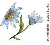 wildflower daisy. floral...   Shutterstock . vector #1109351768