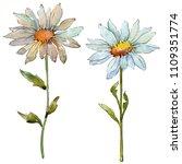 wildflower daisy. floral...   Shutterstock . vector #1109351774