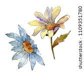 wildflower daisy. floral...   Shutterstock . vector #1109351780