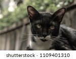 a pet black and white cat in... | Shutterstock . vector #1109401310