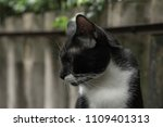 a pet black and white cat in... | Shutterstock . vector #1109401313