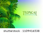 tropical background with banana ... | Shutterstock .eps vector #1109416538