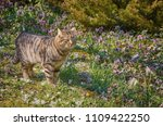 cat on the lawn among the white ... | Shutterstock . vector #1109422250