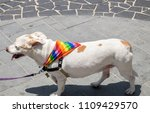 Small photo of Dog with rainbow flag collar at annual gay pride parade & festival in Tel-Aviv