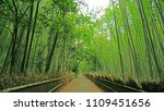 the green bamboo plant forest... | Shutterstock . vector #1109451656