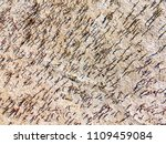 texture of dried cracked... | Shutterstock . vector #1109459084